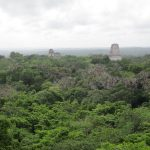 A View from Temple IV in Tikal