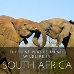 The 11 African Endangered Species of Animals and Places to Visit to See them